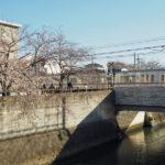 3月20日(金曜日)桜満開? / 映画 一度死んでみた
