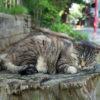 7月19日(日曜日)平和な猫と半沢直樹