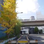 11月19日(木曜日)紅葉と黄葉