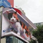 8月7日(土曜日)今さらながら猫を観てきた。
