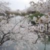 3月28日(日曜日)花見?